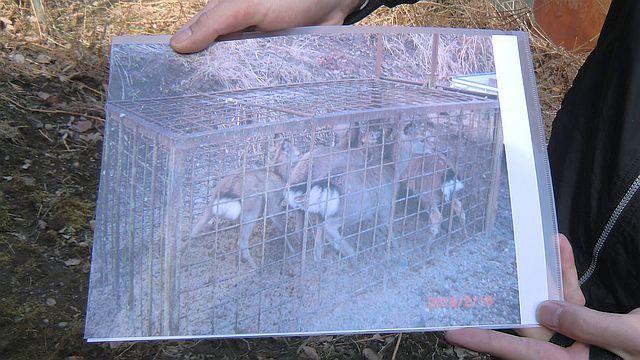 君津市獣害対策フィールドワーク