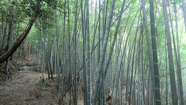 荒廃した竹林