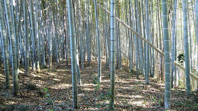 整備を進めている竹林