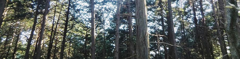 ちば里山・バイオマス協議会(ちば協)